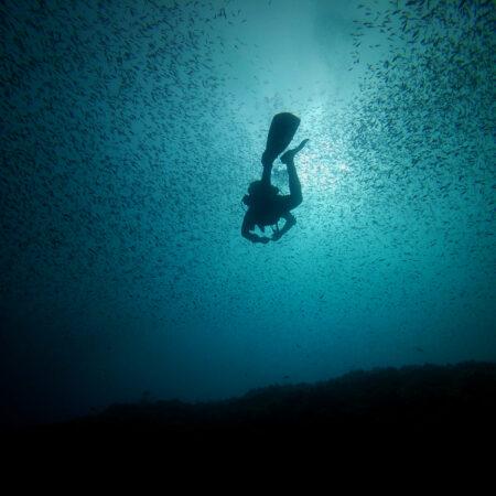 WWF - mostra fotografica 'Mediterraneo, un mare da scoprire' - immagini