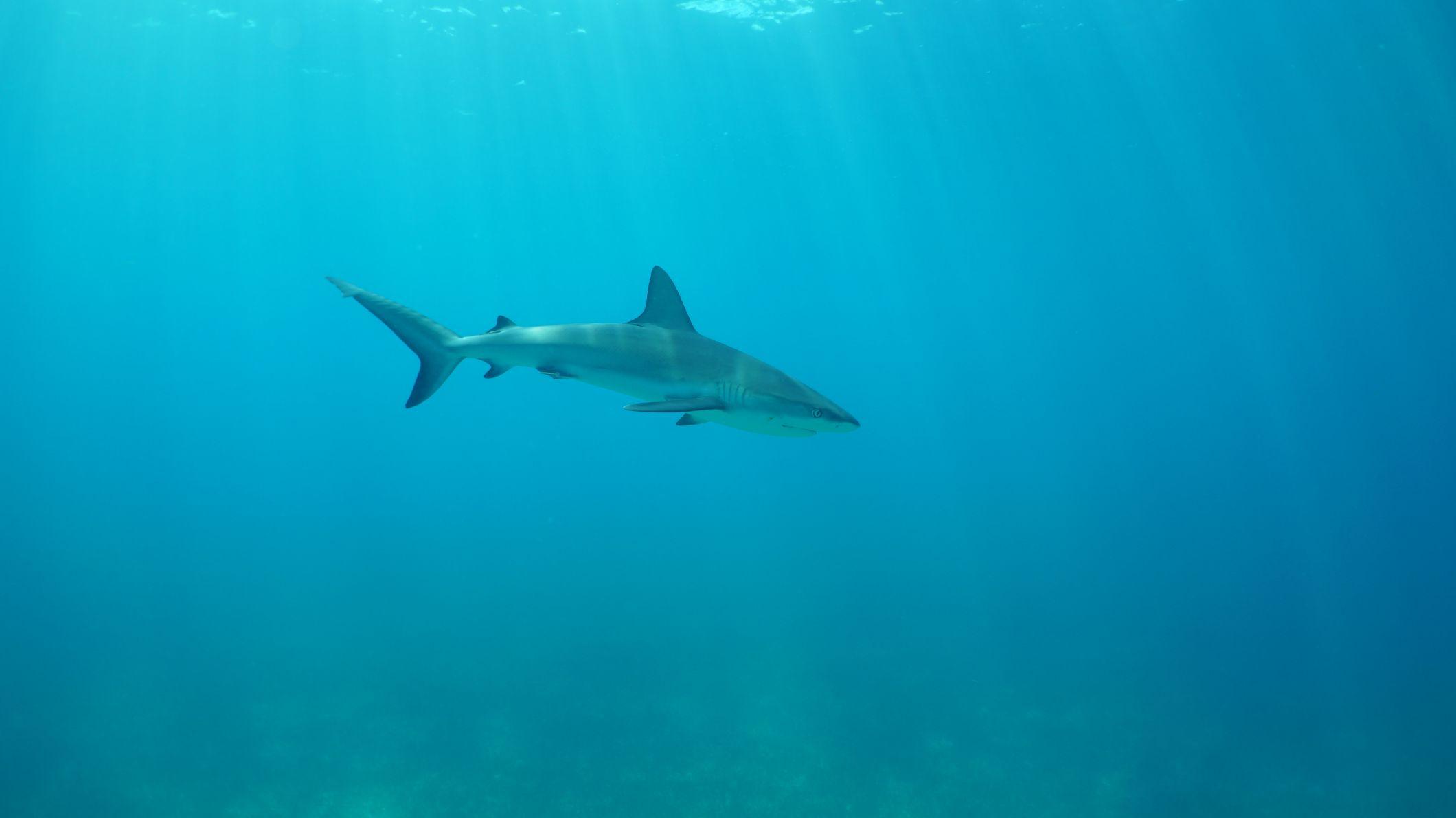 National Geographic - Il mistero degli squali - immagini