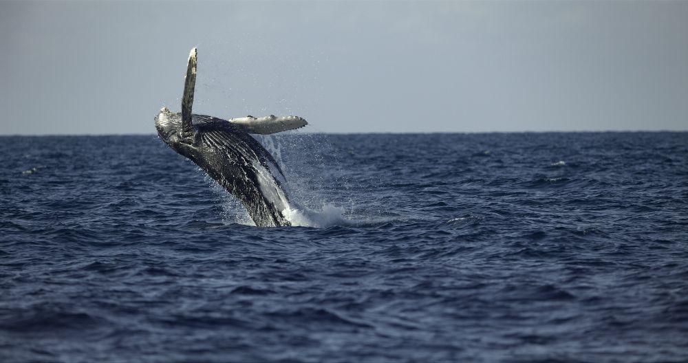 National Geographic - Il segreto delle balene